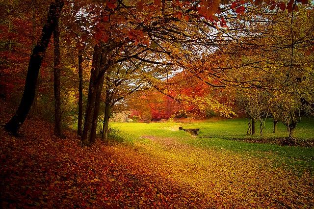 キンモクセイの香りを嗅ぐと秋の到来と昔の彼女を思い出す